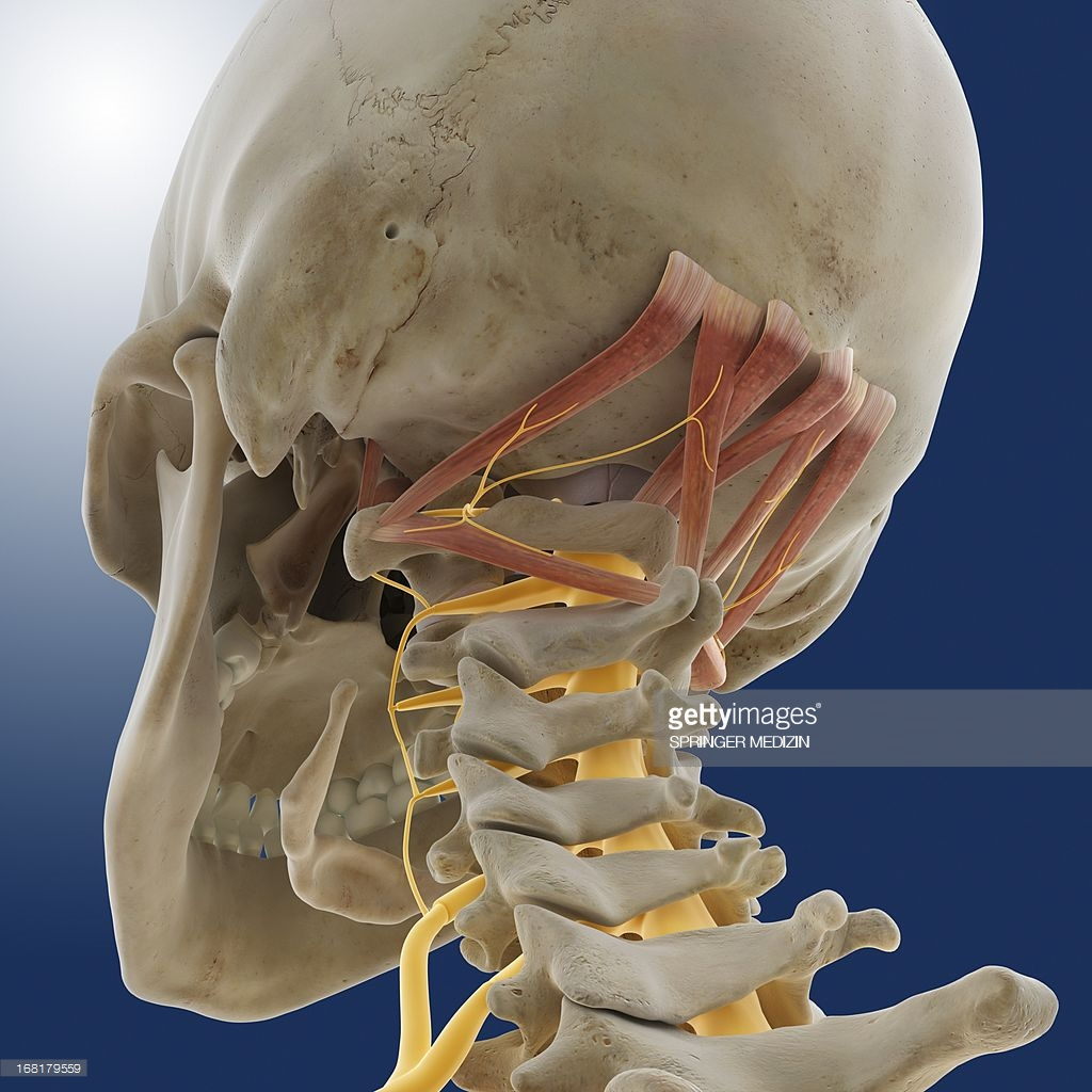 Suboccipital muscles - Dr Gert Ferreira - Chiropractor in Centurion